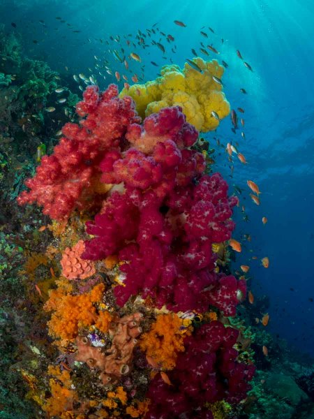 Colorfull Soft Corals